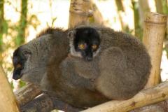 Madagaskar 2008 172