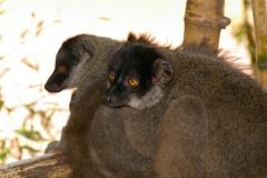 Madagaskar 2008 174