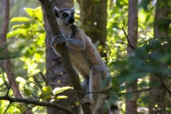 Madagaskar 2008 178