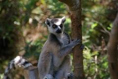 Madagaskar 2008 180