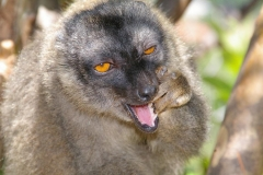 Madagaskar 2008 192