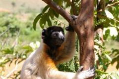Madagaskar 2008 193