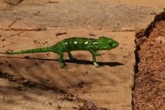 Madagaskar 2008 210